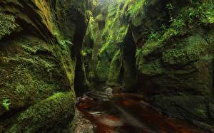 Фото Шотландия Утес Пещера Мох Ручей Finnich Glen Природа