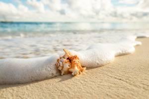 Фото Ракушки Побережье Вблизи Волны Пена Песок Природа