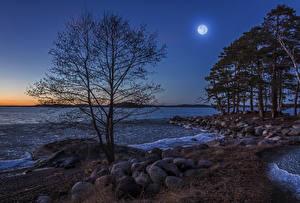 Картинки Швеция Берег Камень Вечер Луна Деревья