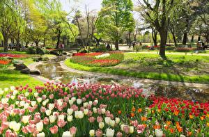 Фотография Токио Япония Парки Тюльпаны Пруд Природа