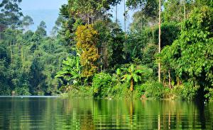 Фото Тропики Леса Озеро Деревья Pangalengan Jawa