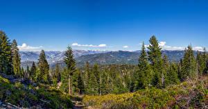 Обои Америка Парки Пейзаж Горы Леса Ели Park Ridge  Sequoia and Kings Canyon