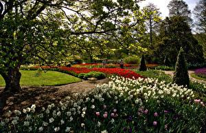 Фотографии Штаты Парки Весна Нарциссы Тюльпаны Кусты Деревья Longwood Gardens