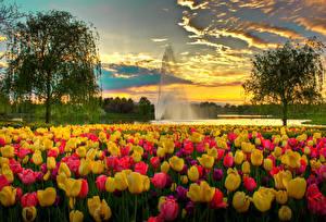 Фотография США Парки Тюльпаны Фонтаны Вечер Чикаго город Деревья Облака Botanic Garden