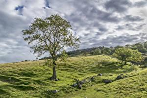 Фотография Великобритания Луга Камень Деревья Облака Yorkshire
