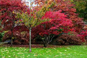 Картинка Великобритания Парки Осень Деревья Листья Swansea Botanic Gardens Wales