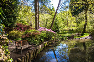 Фотография Великобритания Парк Пруд Деревья Скамья Кустов Clyne Gardens Swansea Природа