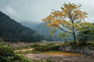 Обои Вьетнам Горы Леса Деревья Туман