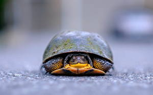 Фотография Вблизи Черепахи Спереди Животные