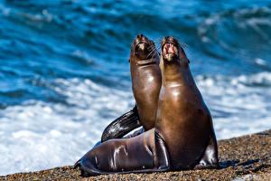 Картинки Побережье Тюлени 2