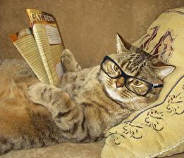 Фотография Оригинальные Кошки Очки Журнал Лапы Взгляд Забавные Животные