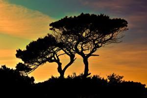 Фото Республика Кипр Деревья Силуэт Cavo Greco Природа