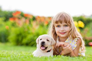 Фотографии Собаки Девочки Смотрит Ретривер Лицо Миленькие Щенок Красивые Ребёнок