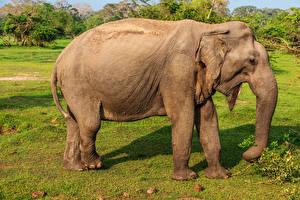 Фотографии Слоны Животные
