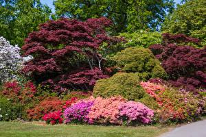 Фото Англия Сады Кусты Деревья Exbury Gardens