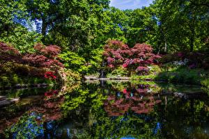 Фотография Англия Парки Пруд Деревья Кусты Отражение Exbury Gardens Природа