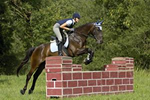 Фотография Верховая езда Лошадь Прыжок Спорт Девушки
