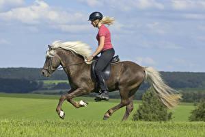 Картинка Конный спорт Лошади Бегущая Шлема Блондинка Девушки