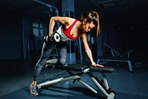 Обои Фитнес Шатенка Гантелей Тренировка молодые женщины Спорт