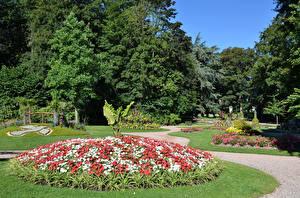 Картинка Франция Парки Бегония Деревья Дизайн Saint-Ome Природа