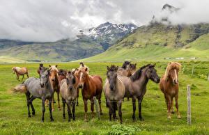 Фото Лошади Много Луга Животные