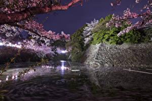 Обои Япония Парки Пруд Цветущие деревья Ветвь Ночные Koriyama Castle Park