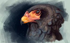 Картинки Рисованные Птицы Орел Головы Клюв Bateleur животное
