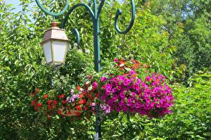 Фотографии Парки Петунья Уличные фонари Цветы