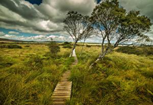 Фотографии Пейзаж Франция Луга Тропинка Деревья Трава Облака Kernevez Brittany