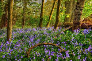 Картинки Весенние Леса HDRI Колокольчики Ствол дерева