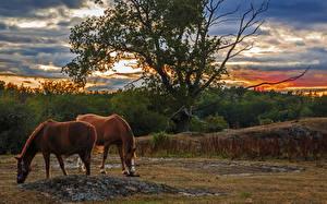 Фото Рассветы и закаты Лошади Двое HDRI Животные