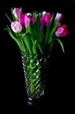 Фото Тюльпаны Черный фон Ваза цветок