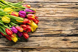 Фотографии Тюльпаны Много Доски Разноцветные Цветы