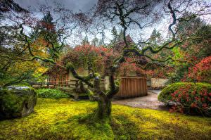 Картинка Штаты Сады Здания Деревья HDRI Мох Ветвь Portland  Japanese Garden Природа
