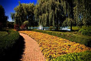 Картинки Штаты Парки Бархатцы Чикаго город Дерева Кусты Botanic Garden Природа