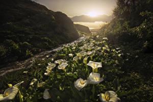Обои Штаты Рассветы и закаты Горы Каллы Пейзаж Калифорния Ручей Природа