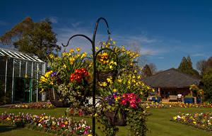 Фотография Великобритания Парки Первоцвет Нарциссы Газон Дизайн Корзина Swansea Botanic Gardens Wales Природа