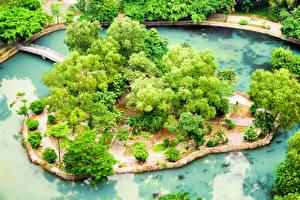 Фотография Вьетнам Парки Пруд Мосты Деревья Сверху tropical garden Ninh Binh Province Природа