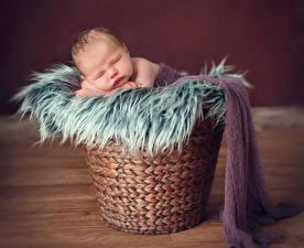 Фотографии Корзины Младенца Сон ребёнок