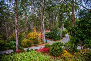 Фотографии Австралия Парки Дороги Деревья Кусты Mount Lofty Botanic Garden Природа