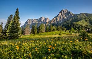 Картинки Австрия Горы Луга Пейзаж Альпы Ель Природа