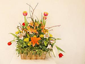 Обои Букеты Альстрёмерия Тюльпаны Цветной фон Корзинка Цветы