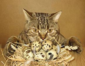 Фото Коты Перья Яйца Смотрит