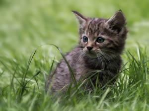 Фото Кошки Котята Трава Взгляд Животные