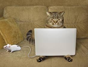 Фотография Кошки Мыши Ноутбуки Диван Смешные Животные Юмор