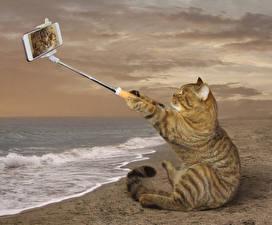 Обои Креатив Кошки Берег Забавные Смартфоны Сидит Селфи животное