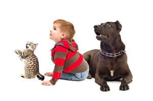 Картинки Собаки Кошки Мальчики Белый фон Взгляд Втроем Животные Дети