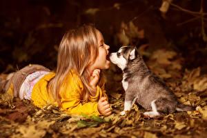 Обои Собаки Хаски Щенок Девочки Счастливые Дети Животные