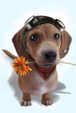 Фотография Собаки Рисованные Смотрит Миленькие Животные