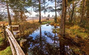 Обои Англия Осень Деревьев Отражении Болотом St.Leonards Природа